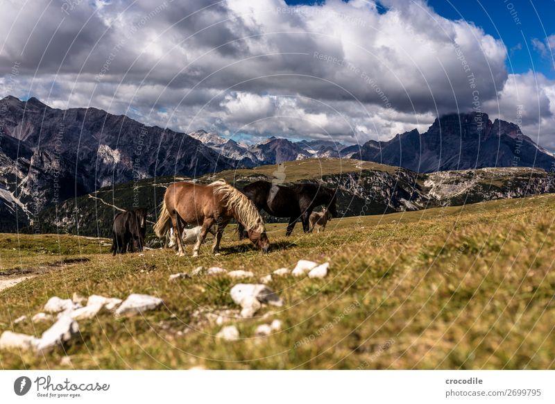 # 814 Drei Zinnen Dolomiten Sextener Dolomiten Weltkulturerbe Hochebene Farbfoto wandern Fußweg Gipfel Bergsteigen Alpen Berge u. Gebirge Schönes Wetter Wiese