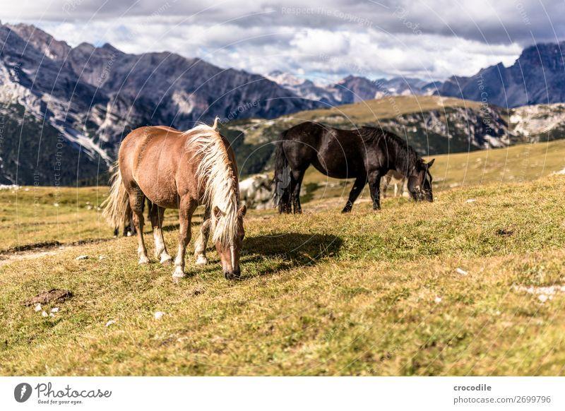 # 813 Drei Zinnen Dolomiten Sextener Dolomiten Weltkulturerbe Hochebene Farbfoto wandern Fußweg Gipfel Bergsteigen Alpen Berge u. Gebirge Schönes Wetter Wiese