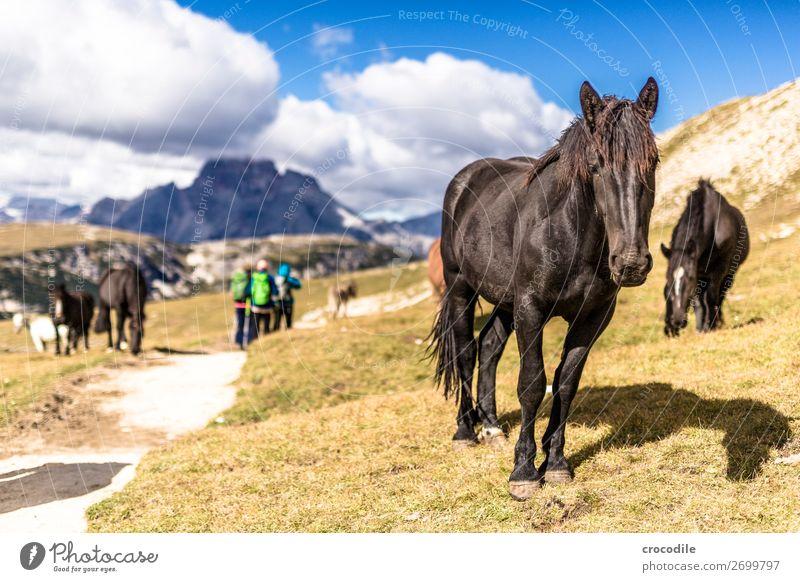 # 812 Drei Zinnen Dolomiten Sextener Dolomiten Weltkulturerbe Hochebene Farbfoto wandern Fußweg Gipfel Bergsteigen Alpen Berge u. Gebirge Schönes Wetter Wiese