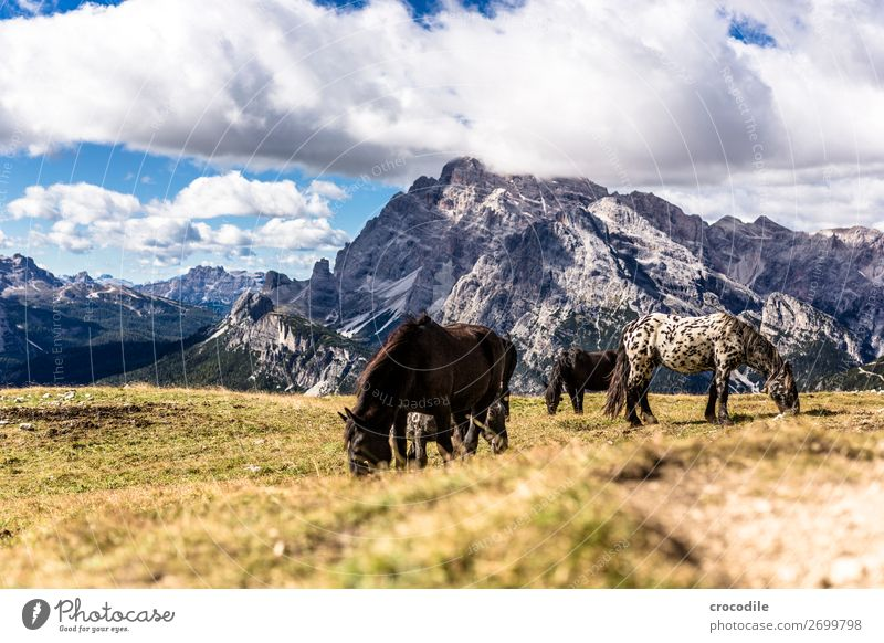 # 811 Drei Zinnen Dolomiten Sextener Dolomiten Weltkulturerbe Hochebene Farbfoto wandern Fußweg Gipfel Bergsteigen Alpen Berge u. Gebirge Schönes Wetter Wiese