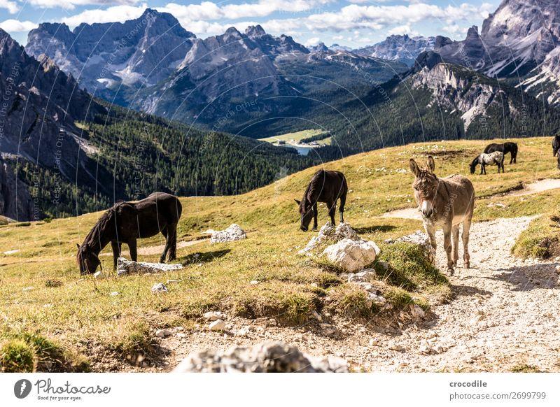 # 810 Drei Zinnen Dolomiten Sextner Dolomiten Weltkulturerbe Hochebene Farbfoto wandern Fußweg Gipfel Bergsteigen Alpen Berge u. Gebirge Schönes Wetter Wiese