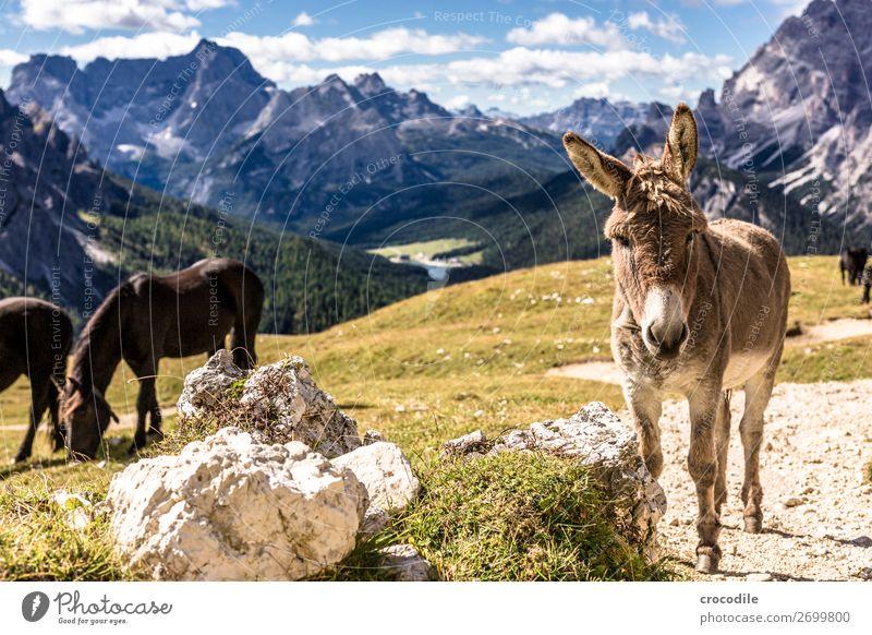 # 809 Drei Zinnen Dolomiten Sextener Dolomiten Weltkulturerbe Hochebene Farbfoto wandern Fußweg Gipfel Bergsteigen Alpen Berge u. Gebirge Schönes Wetter Wiese