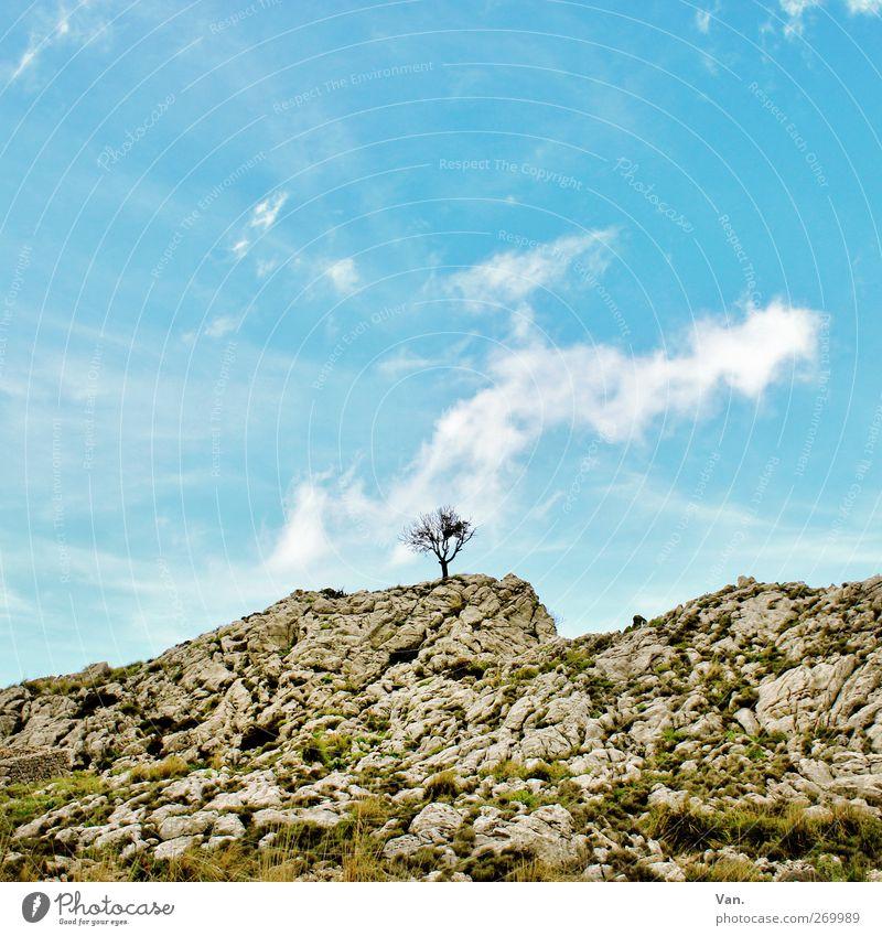 Einzelkämpfer Ferien & Urlaub & Reisen Natur Landschaft Erde Luft Himmel Wolken Pflanze Baum Gras Moos Hügel Felsen Berge u. Gebirge Stein blau grau Einsamkeit