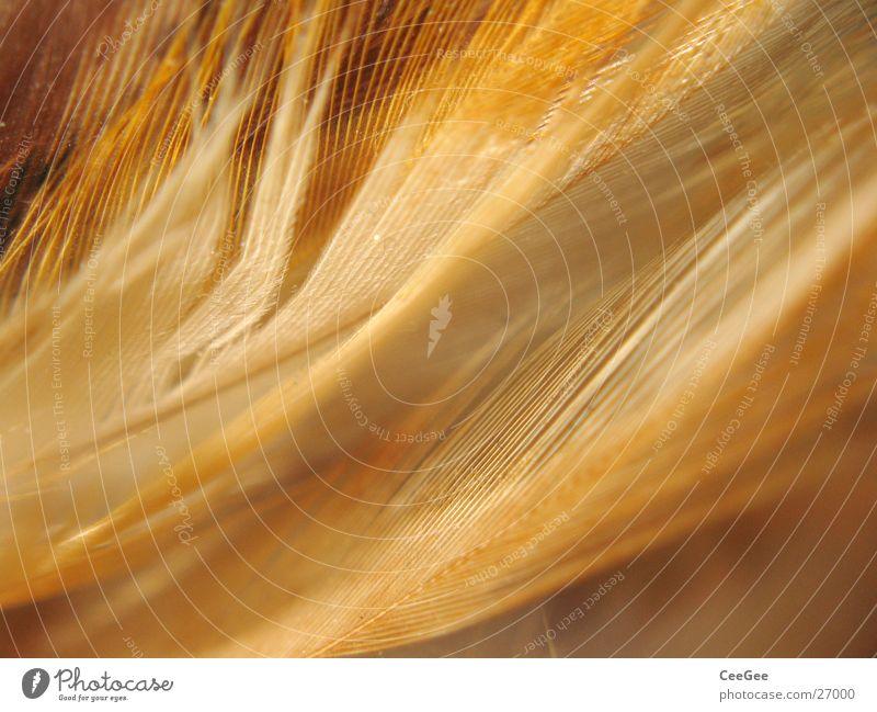 federleicht weich Physik kuschlig Flaum fein braun Ocker Feder Wärme Farbe Strukturen & Formen Natur Nahaufnahme Makroaufnahme Linie