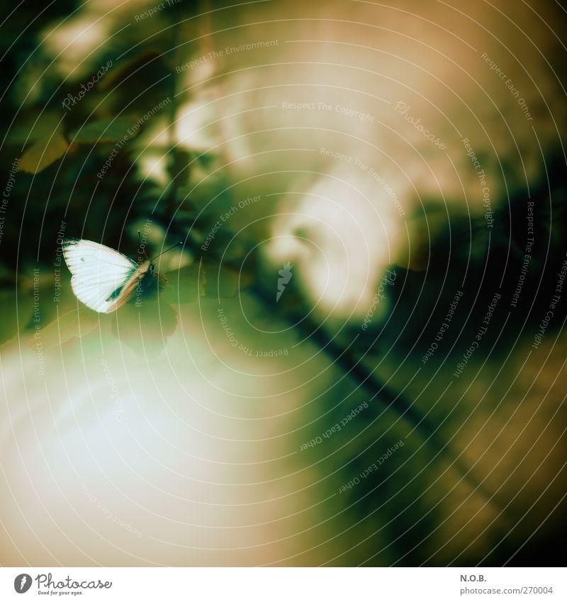 Schmetterlings Traum Natur grün Pflanze Tier Umwelt Wiese Frühling Garten Park ästhetisch Sträucher Neugier friedlich