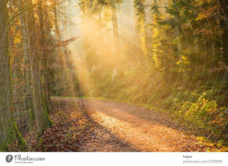 Sonnenstrahlen im Wald Erholung Winter Natur Wärme hell weich Idylle Beleuchtung Lichterscheinung Bühnenbeleuchtung erleuchten mystisch fantastisch Wege & Pfade