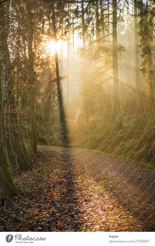Sonnenstrahlen im Wald Natur schön Erholung Winter Wärme hell Idylle weich
