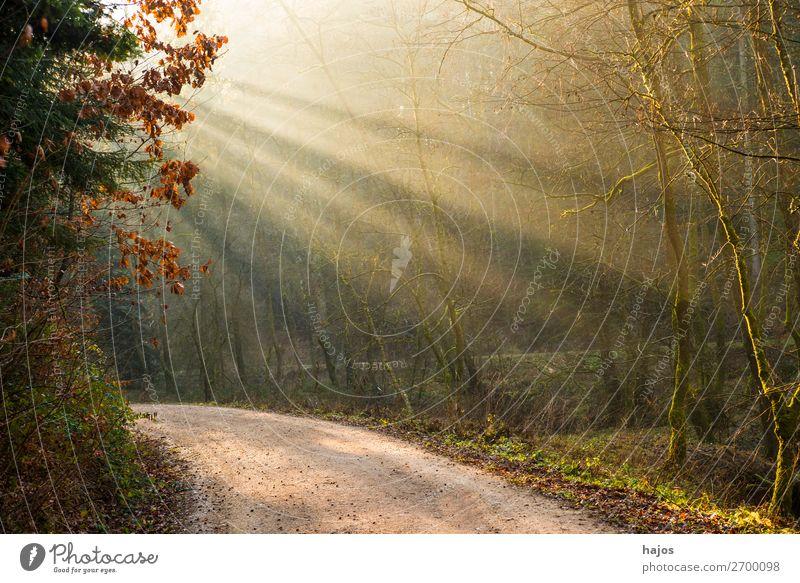Lichterscheinung im Wald Erholung Winter Natur Schönes Wetter Wärme weich Idylle Sonnenstrahlen Sonnenlicht Strahlen Weg leuchtend mystisch hell erleuchtet