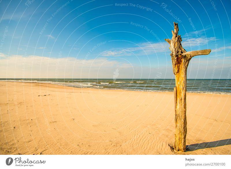 einsamer Strand der Ostsee Ferien & Urlaub & Reisen Sommer Natur Sand Himmel Wolken blau braun mehrfarbig Idylle Meer Ostseestrand leer Paradis Baum weit breit