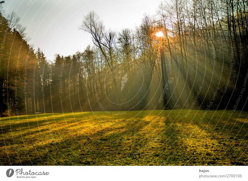 Sonnenstrahlen im Wald Erholung Winter Natur Wärme hell weich Idylle Strahlen Lichterscheinung Reflexionen Bäume Wiese grün Herbst Licht und Schatten strahlend