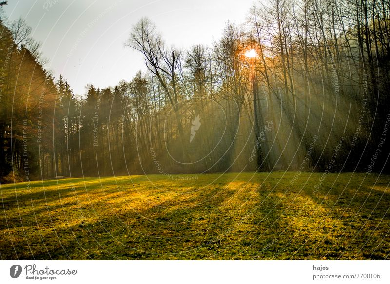 Sonnenstrahlen im Wald Natur Erholung Winter Wärme hell Idylle weich