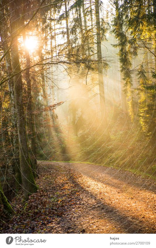 Sonnenstrahlen im Wald Natur Erholung Winter Wärme Idylle weich Lichtschein