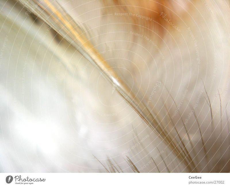 federleicht 3 Natur weiß Farbe Linie hell braun weich Feder fein kuschlig Ocker