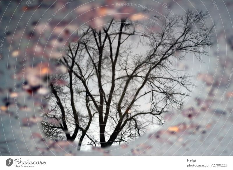 Winter im Park Natur Pflanze Wasser Baum Blatt ruhig schwarz Leben Umwelt natürlich außergewöhnlich braun grau Stimmung