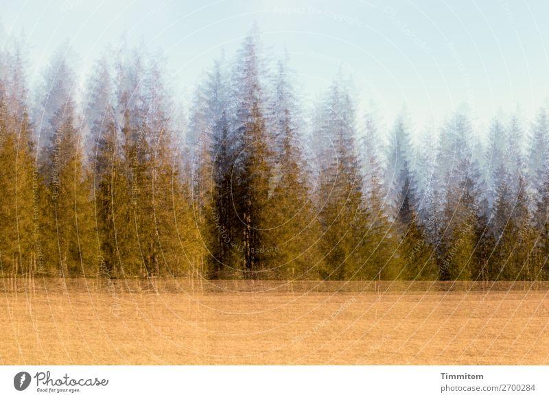 Schwarzwald im Abendlicht Himmel Ferien & Urlaub & Reisen Natur Pflanze Landschaft Baum Wald Umwelt Wiese Gefühle Doppelbelichtung Abendsonne