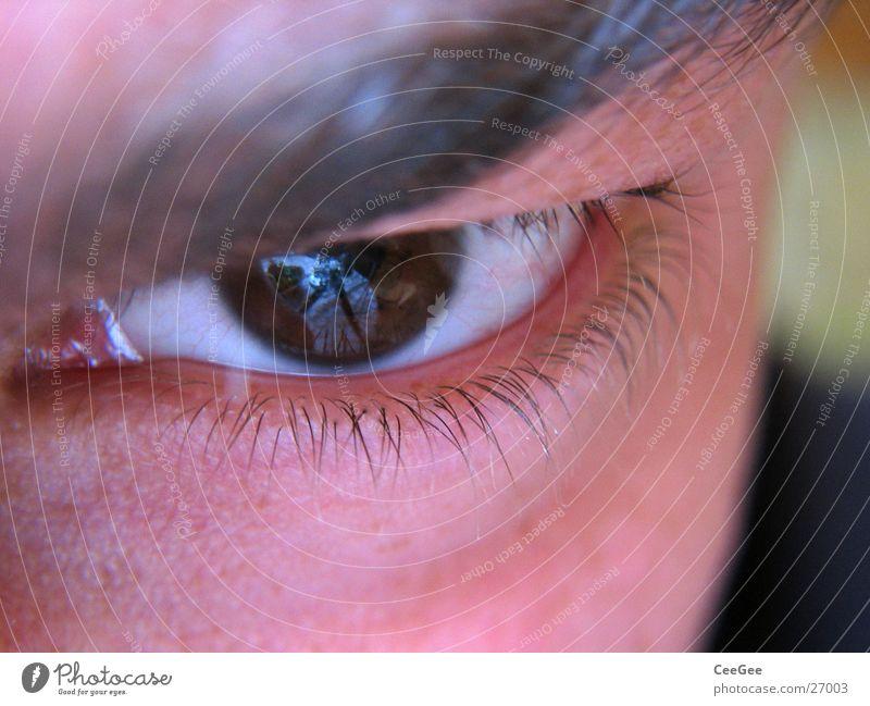Durchblick Pupille weiß braun ernst Gefäße Wimpern fein Mann Auge Regenbogenhaut Mensch Haut Nahaufnahme Makroaufnahme Gesicht Blick Augenbraun anschaun