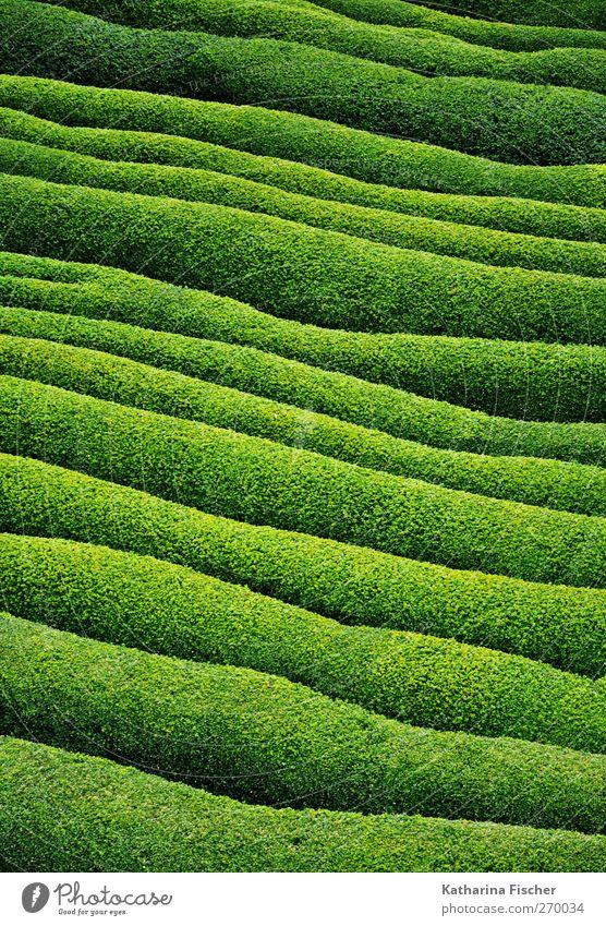 Grüne Welle ( 100. ) Natur Landschaft Pflanze Gras Sträucher Grünpflanze Garten Park Feld grün Gartenarchitektur Landschaftsformen hellgrün dunkelgrün Farbstoff