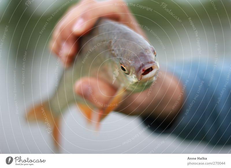 Fisch gefangen Natur Wasser Hand Tier Freiheit Glück See Erfolg Finger Fisch Fluss fangen Angeln Teich harmonisch verloren