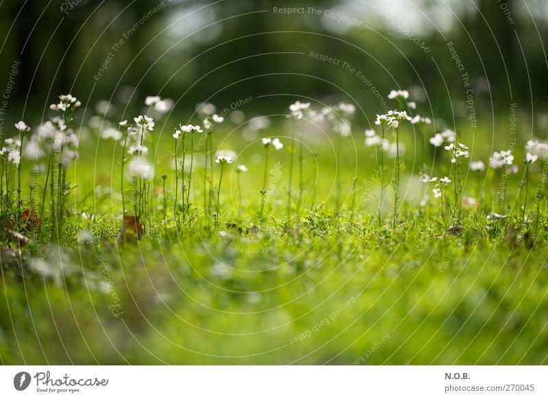 Die Frühlingsmädels Umwelt Natur Pflanze Schönes Wetter Blume Blüte Garten Park Wiese ästhetisch grün weiß Freude Glück Fröhlichkeit Lebensfreude