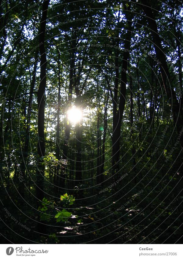 durchscheinend Wald Baum Sträucher Licht dunkel gelb schwarz geheimnisvoll Lichtspiel Berge u. Gebirge Pflanze Sonne Schatten hell Beleuchtung Himmel