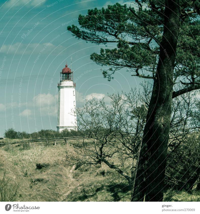 Hiddensee   Heimleuchter Himmel Natur weiß Wolken Umwelt Landschaft Frühling Schönes Wetter Baumstamm Leuchtturm