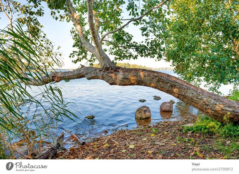 Grüner Baum am Flussufer schön Ferien & Urlaub & Reisen Tourismus Sommer Natur Landschaft Pflanze Wasser Himmel Sonnenlicht Frühling Herbst Schönes Wetter Gras