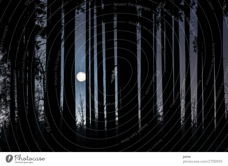 nachts im wald Mond Vollmond Baum Wald außergewöhnlich bedrohlich dunkel gruselig natürlich Angst Natur Himmel Nacht Gedeckte Farben Außenaufnahme Menschenleer