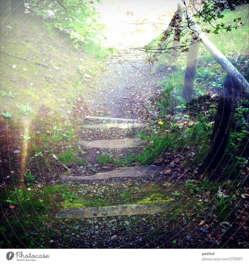 Märchenwald Natur Sonne Sommer Einsamkeit Wald Erholung Holz Wege & Pfade Erde Treppe wandern Sträucher Fußweg Moos Doppelbelichtung