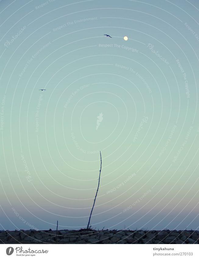 Stockente ruhig Meditation Meer Wolkenloser Himmel Nachthimmel Mond Schönes Wetter Sträucher Küste Wildtier Vogel 2 Tier Stein Holz beobachten fliegen stehen