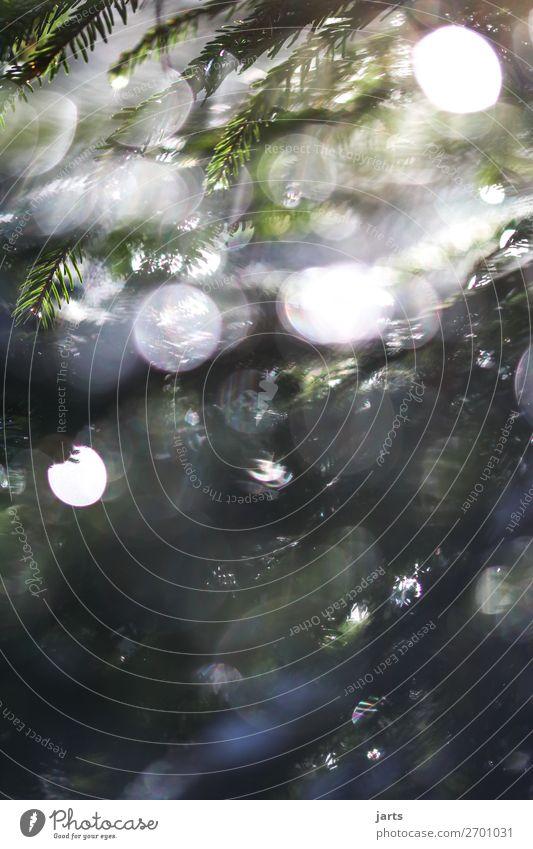 Wintergrün VI Natur Wassertropfen Pflanze Baum Wildpflanze Wald leuchten frisch glänzend hell nass natürlich schön Gelassenheit ruhig Tannenzweig Nadelwald
