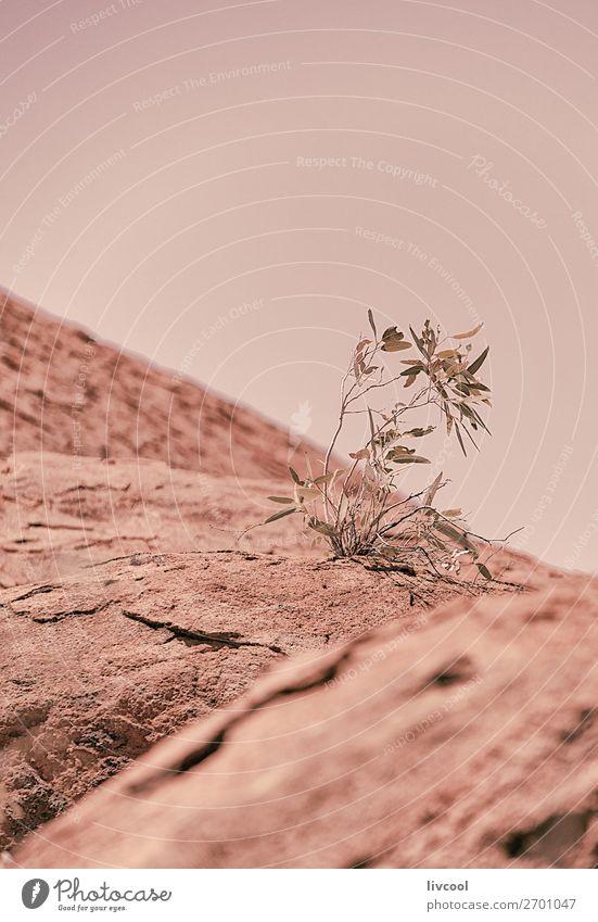 Detail der Flora in Uluru, Ayers Rock-Australien Leben Ferien & Urlaub & Reisen Tourismus Ausflug Abenteuer Sonne Natur Pflanze Tier Sand Wolken Frühling Baum