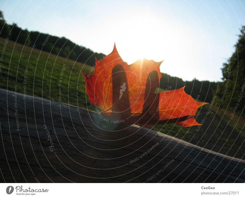Herbstsonne Blatt rot Wald Wiese Finger Hand Licht verdeckt Holz Farbe Makroaufnahme Nahaufnahme Sonne Landschaft Schatten Balken verrückt liegen Himmel blau