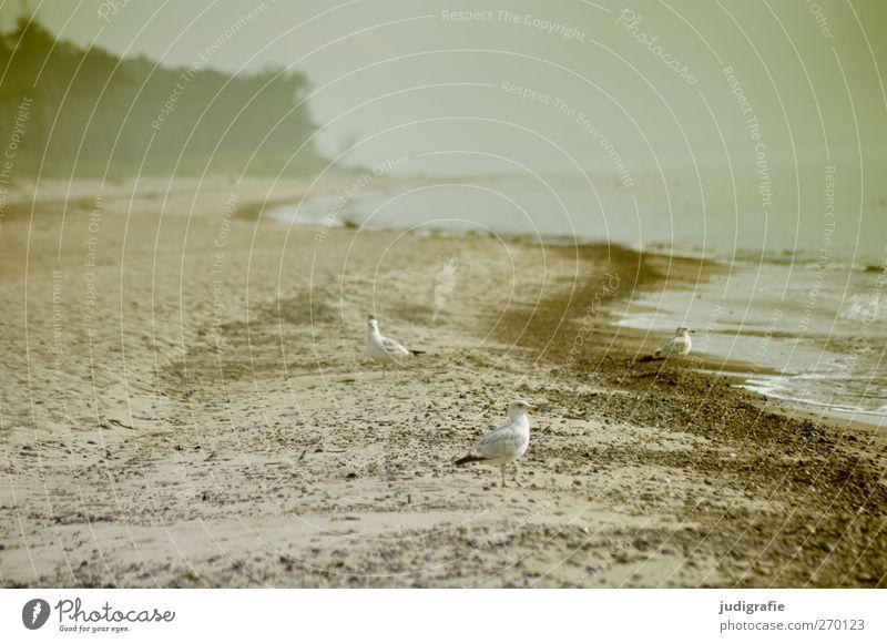Weststrand Umwelt Natur Landschaft Pflanze Tier Wasser Klima Küste Strand Ostsee Darß Wildtier Vogel Möwe 3 natürlich wild Stimmung Farbfoto Außenaufnahme