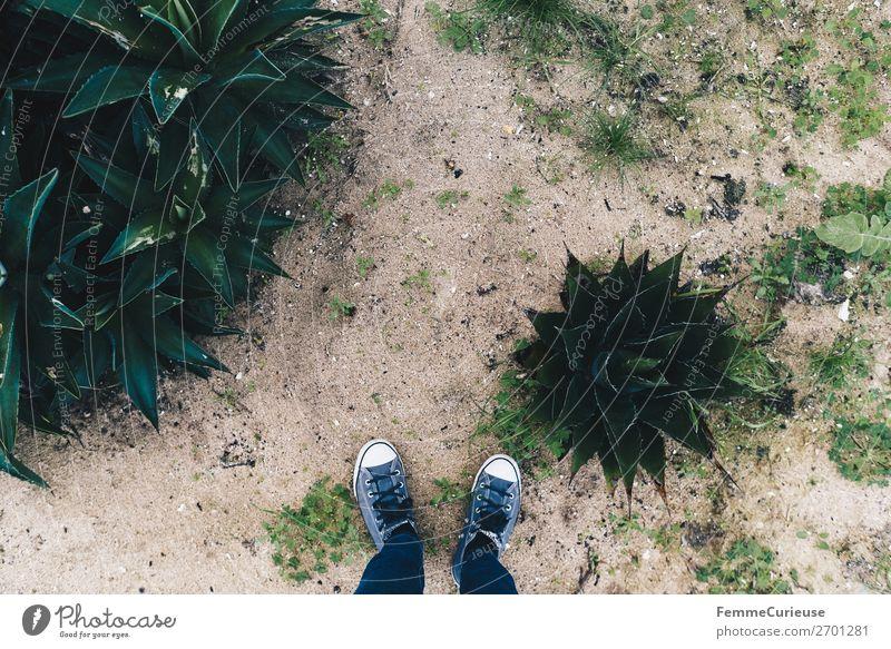 Feet of a person on sand with plants Mensch Ferien & Urlaub & Reisen Pflanze Küste Sand Freizeit & Hobby Spaziergang Jeanshose Turnschuh Sandstrand Portugal