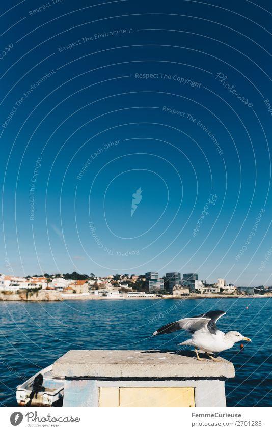 Seagull setting out to fly away Tier Ferien & Urlaub & Reisen Freiheit Blauer Himmel Schönes Wetter Sonnenstrahlen Möwe fliegen Atlantik Meer Hafenstadt