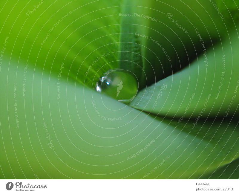 Perle der Natur Wasser Blume grün Pflanze Regen
