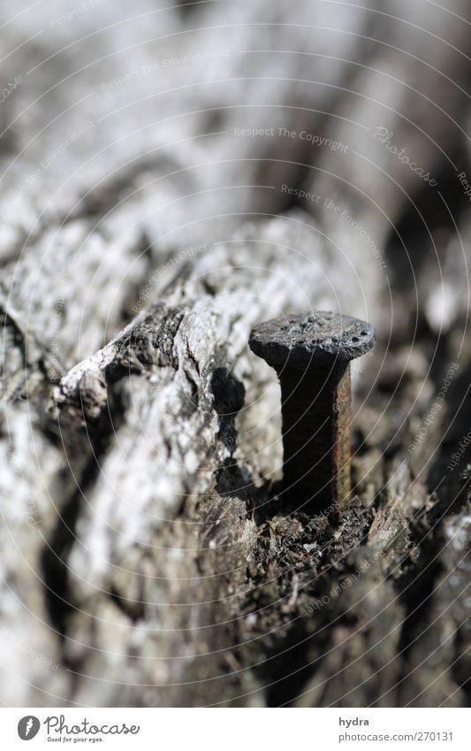 Ein Männlein steht im Walde Natur alt Baum Holz grau Metall braun Kraft natürlich Erfolg Sicherheit einfach festhalten Ewigkeit Mut Baumstamm