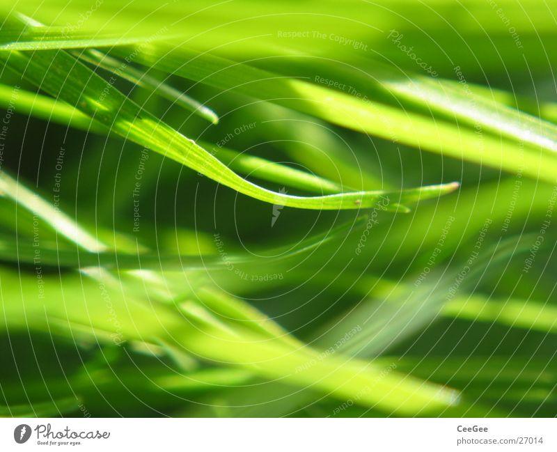 Durcheinander im Gras Natur grün Wiese Rasen Halm durcheinander