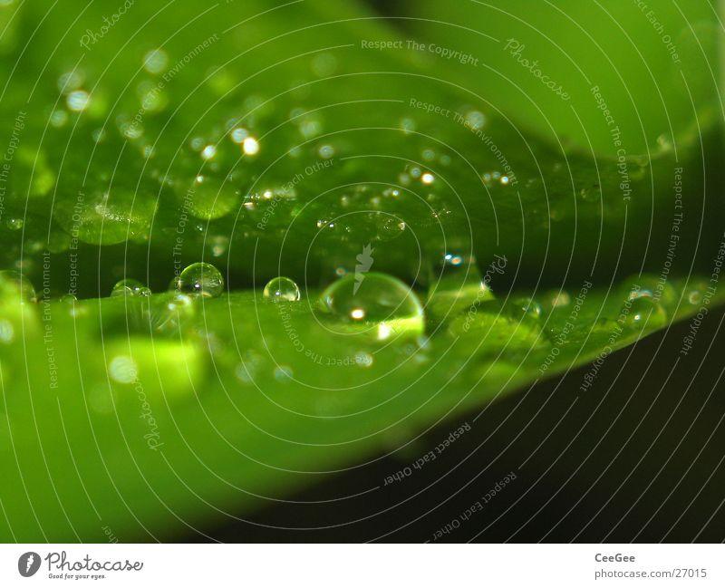 Tröpfchen Natur Wasser grün Pflanze Blatt Regen Wassertropfen