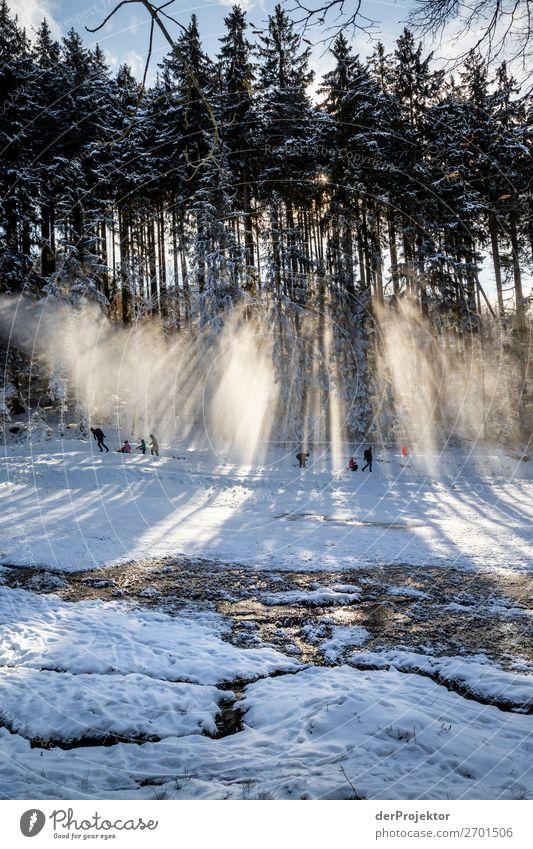 Rodeln am Wurmberg im Harz Ferien & Urlaub & Reisen Natur Pflanze Landschaft Baum Freude Wald Winter Berge u. Gebirge Umwelt Schnee Sport Glück Tourismus