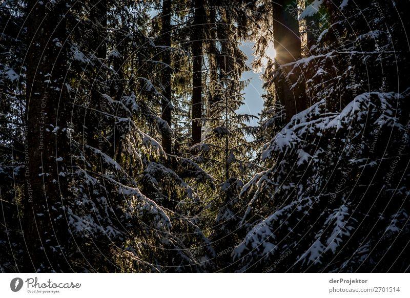 Zaghafte Sonnenstrahlen im winterlichen Nadelwald Ferien & Urlaub & Reisen Natur Pflanze Landschaft Baum Wald Winter Ferne Berge u. Gebirge dunkel Umwelt Schnee