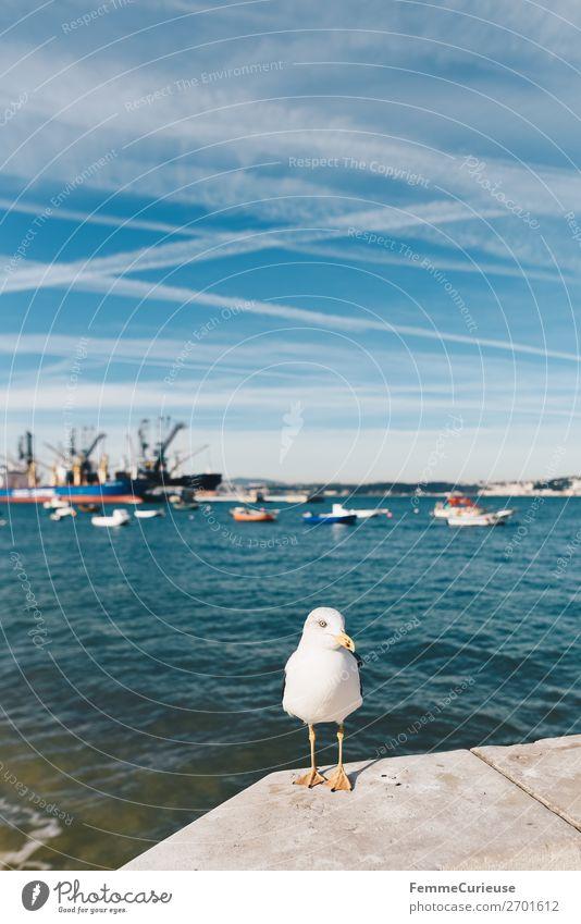 Seagull in front of port in Trafaria Ferien & Urlaub & Reisen Sonne Tier Reisefotografie Schönes Wetter Hafen Möwe Fischerboot Urlaubsfoto Kondensstreifen