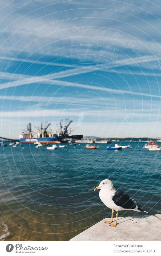 Seagull in front of port in Trafaria Himmel Verkehr Verkehrsmittel Verkehrswege Schifffahrt Fischerboot Ferien & Urlaub & Reisen Portugal Hafen Möwe Tourismus