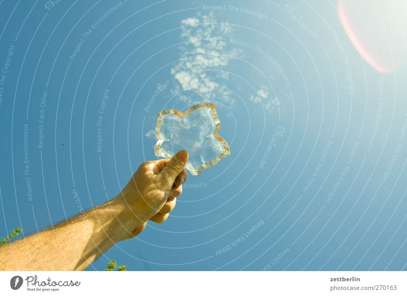 Himmel Freiheit Sommer Garten Hand Umwelt Natur Frühling Klima Klimawandel Wetter Schönes Wetter Wachstum gut schön Freude Glück Fröhlichkeit gartenkolonie