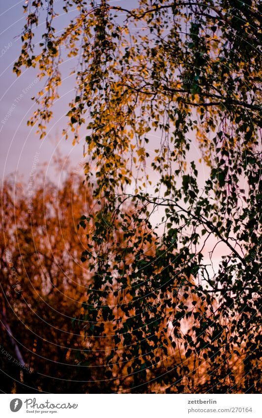 Sonnenuntergehung Sommer Garten Umwelt Natur Landschaft Pflanze Sonnenaufgang Sonnenuntergang Sonnenlicht Klima Klimawandel Wetter Schönes Wetter Baum Blatt