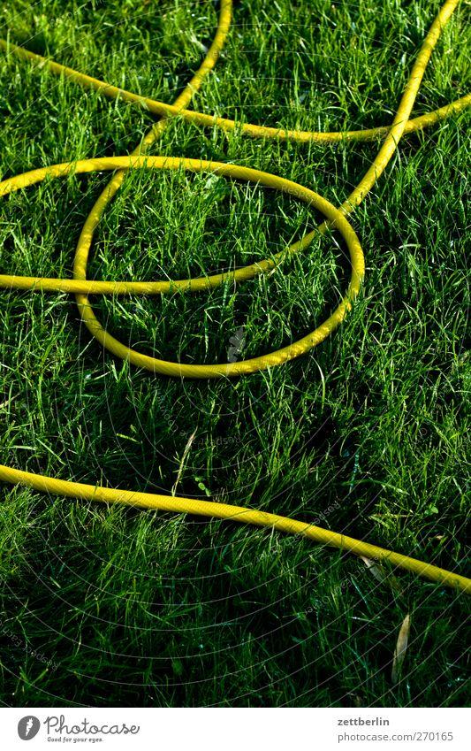 Schlauch Freizeit & Hobby Sommer Häusliches Leben Garten Umwelt Natur Landschaft Frühling Klima Klimawandel Wetter Schönes Wetter Pflanze Blatt Grünpflanze Park