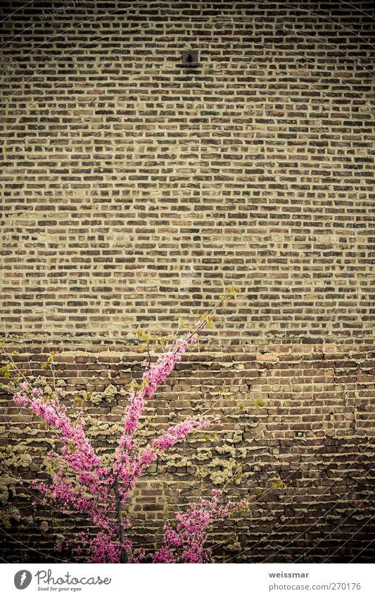 Mauerkämpfer Natur Stadt Pflanze Wand Wärme Mauer braun rosa Sträucher USA positiv New York City Nordamerika