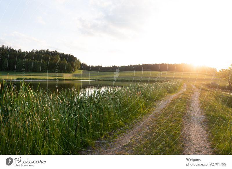 Abendrunde harmonisch Wohlgefühl Zufriedenheit Erholung laufen achtsam Vorsicht Gelassenheit geduldig ruhig See Ferien & Urlaub & Reisen Landschaft Fußweg