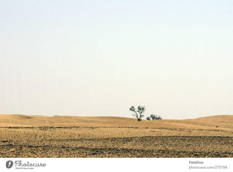 Abu Dhabi {Für Haus Capri, außer für Time ;-) } Himmel Natur Baum Umwelt Landschaft Wärme Sand hell Erde natürlich Urelemente Schönes Wetter Wüste heiß