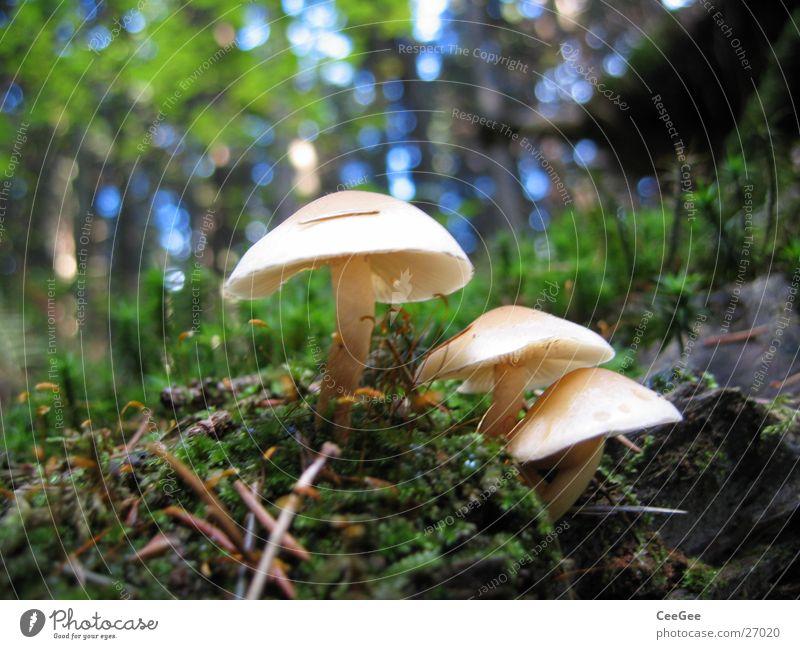 Pilze Wald Waldboden Baum Bodenbelag Erde Ast Zweig Stock Pflanze Natur Makroaufnahme Nahaufnahme